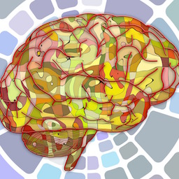 Image of the brain, NLI uses real neuroscience research
